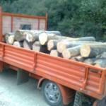 Aproape 38 metri cubi de material lemnos transportat fără forme legale confiscat de polițiștii la Sebeș