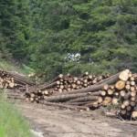 Firmele care au abandonat material lemnos în albia râului Sebeş din sectorul Şugag – Oaşa vor fi amendate