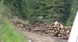 lemne-abandonate-sugag-oasa