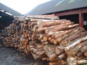 material-lemnos-confiscat-sasciori