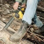 Prăpădul din pădurile noastre sau cum a ajuns producţia de buştean pentru gatere esenţa industriei lemnului