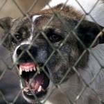 Medic veterinar din Sebeș dispus să cedeze primăriei un teren pentru construcția unui adăpost pentru câinii comunitari