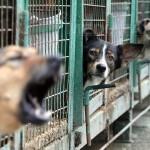 Adăpostul pentru câini din Sebeş găzduieşte peste 40 de patrupede