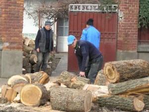 taietori-lemne