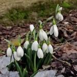 Tradiţii şi obiceiuri de 1 martie, ziua Mărţişorului. Care este povestea sărbătorii româneşti a primăverii | sebesinfo.ro