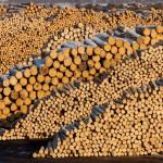 Două ONG-uri cer în instanță suspendarea autorizației de construcție a unei noi fabrici a Holzindustrie Schweighofer în Covasna