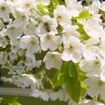 Mesaje de Florii 2014. SMS-uri, felicitări și urări de Sărbătoarea Floriilor | sebesinfo.ro
