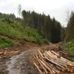 Jandarmii montani au intervenit pentru salvarea doi turiști rămași blocați pe Valea Sebeșului