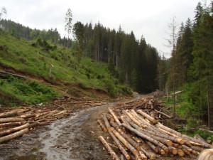 drum-forestier-valea-sebesului