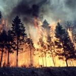 ISU Alba va organiza mâine pe Muntele Șureanu un exercițiu de simulare a unui incendiu la fondul forestier