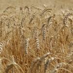 În atenţia fermierilor şi cetăţenilor municipiului Sebeş, inclusiv a localităţilor Lancrăm, Petreşti, Răhău