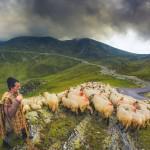 230 de copii, din sate de munte ale județului Alba, au intrat în vacanță pentru a-și însoți părinții plecați cu oile în transhumanță