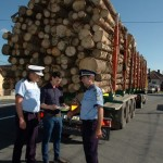 42,7 metri cubi de material lemnos transportați cu acte neconforme au fost confiscați de polițiștii din Sebeș