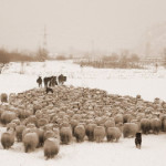 Prefectul Gheorghe Feneşer:  Scandalul dintre ciobani şi vânători nu se rezolvă nici cu bâta, nici cu puşca!