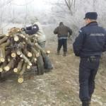 Tânăr de 19 ani din Săsciori cercetat penal, după ce a fost prins în flagrant în timp ce tăia fără drept mai mulți arbori