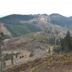 """O capcană originală, """"scutul pădurii"""" apără codrii pe Valea Sebeşului!"""