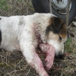 Adolescent din Petrești acuzat că ar ucide câinii în chinuri groaznice