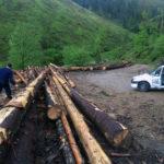 Peste 88 metri cubi de material lemnos confiscat de polițiști în urma unui control efectuat pe raza comunei Șugag