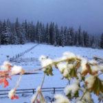 Iarna și-a intrat în drepturi în Munții Șureanu, unde stratul zăpadă măsoară deja peste 5 centimetri