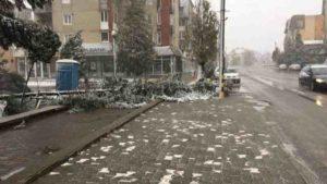 brad-doborat-de-furtuna-in-cartierul-lucian-blaga-din-sebes