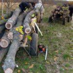 Tânăr de 23 de ani din Cîlnic cercetat penal după ce a tăiat fară drept mai mulți arbori