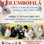 """27 – 29 ianuarie 2017: Expoziție columbifilă organizată în sala de festivităţi a Colegiului Național """"Lucian Blaga"""" din Sebeș"""