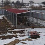 Un adăpost de câini fără stăpân care funcționa ilegal în Lancrăm a fost închis de către DSVSA Alba