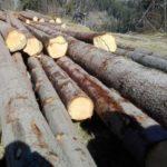 182 metri cubi de material lemnos conficat de polițiști, de la punctul de lucru din Șugag al unei societăți comerciale din județul Cluj