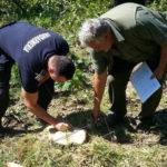 Nu mai puțin de 15 persoane fizice din Vințu de Jos au fost trimise în judecată pentru tăieri ilegale de arbori