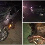 Un cal lăsat nesupravegheat a fost SPULBERAT de un autoturism, între Sebeș și Petrești