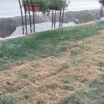 Un cetățean din Sebeș cere ca firma ce a montat gazonul care s-a uscat să dea dovada de profesionalism și să-l înlocuiască pe tot