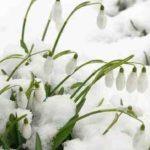 Mesaje de 1 martie, Mărțisor. Felicitări şi urări pe care le puteţi trimite cu ocazia venirii primăverii | sebesinfo.ro