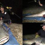 Un pescar amator din Sebeș a reușit să captureze un somn de 185 de cm, pe râul Mureș