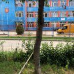 """Un vișin din apropierea Școlii Gimnaziale """"Mihai Kogălniceanu"""" din Sebeș a ajuns un real pericol pentru """"pofticioșii"""" care ar îndrăzni să ia fructe din el"""